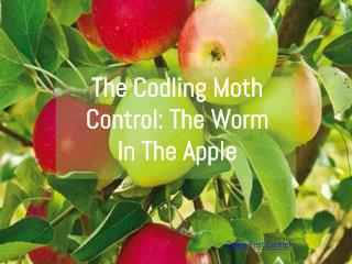 Codling Moth Control: The Worm In The Apple
