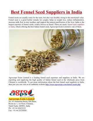 Best Fennel Seed Suppliers in India