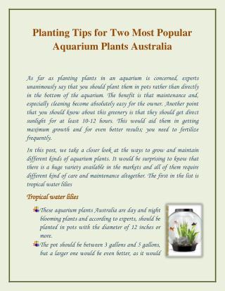 Popular Aquarium Plants in Australia