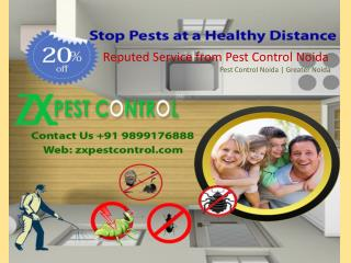Reputed Service from Pest Control Noida- 9899176888