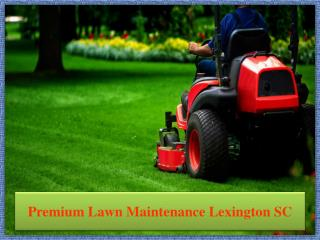 Premium Lawn Maintenance Lexington SC