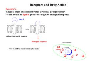 Receptors and Drug Action