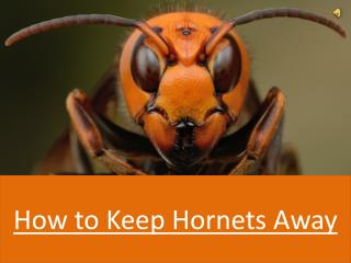 How To Keep Hornets Away