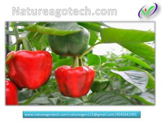 Ripening Chamber, Tissue Culture Banana, Colour Capsicum Plants