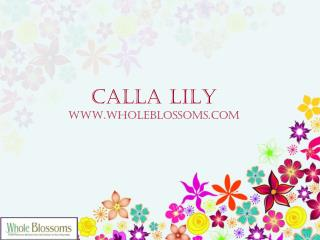 Order Calla Lilies - www.wholeblossoms.com