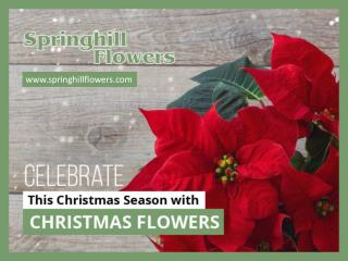Different Types of Christmas Flowers