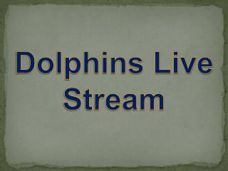 Dolphins live stream