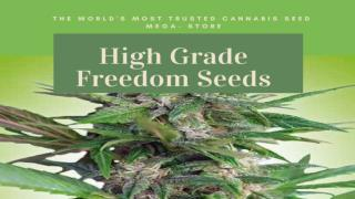 High Grade Freedom seeds