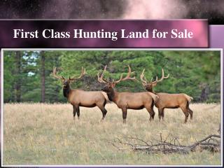 First Class Hunting Land for Sale