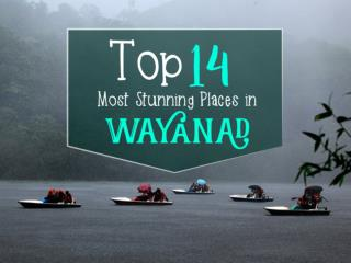 Top 14 Most Stunning Places in Wayanad