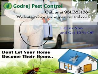 Looking for Pest Control Noida? Contact us 9811381458