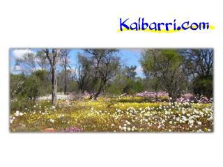 Get Luxury Kalbarri Hotels, Resorts & Restaurants in Best Price WA