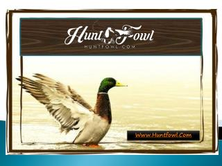 Guided Duck Hunts - Huntfowl