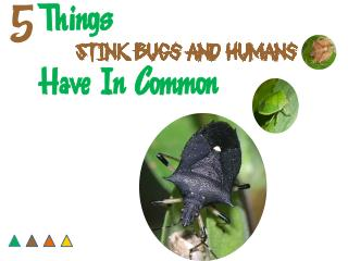 5 Things Stink Bugs and Humans Have In Common