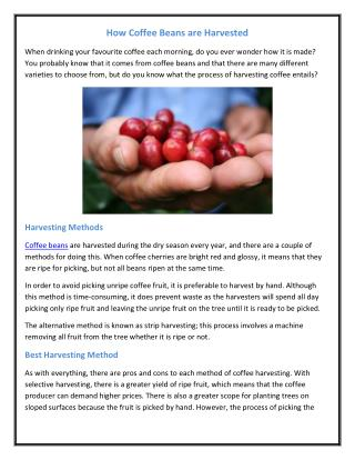 How Coffee Beans are Harvested