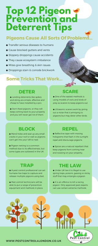The best pigeon prevention and deterrent tips