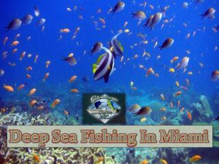 Deep sea fishing in Miami