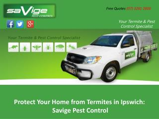 Protect Your Home from Termites in Ipswich: Savige Pest Control