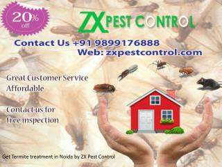 Get Termite treatment in Noida by ZX Pest Control