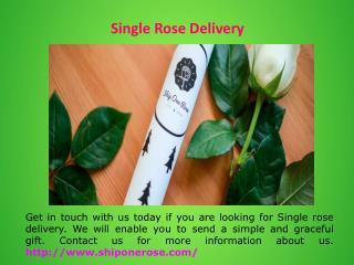 Send Single Rose Online