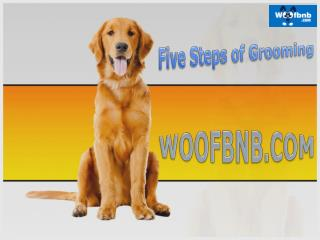Pet Grooming Services in Pune
