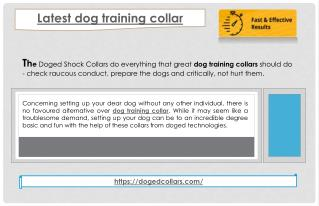 Latest dog training collar