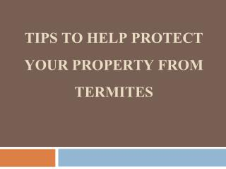 Tips To Help Protect Your Property From Termites