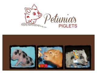 Petunias Piglets Juliana teacup micro mini pigs ; Home raised pet teacup mini pigs for sale in Washington