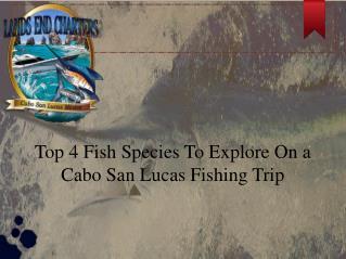 Cabo San Lucas Fishing Trip