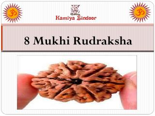 Certified Eight Mukhi Rudraksha