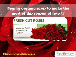 Wholesale Roses Online - www.wholeblossoms.com