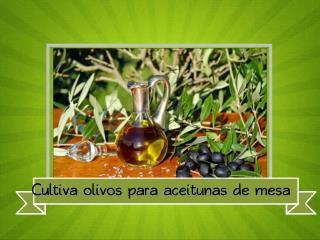 Cultiva olivos para aceitunas de mesa
