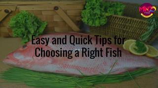 Easy and Quick Tips for Choosing a Right Fish