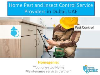 Home Pest and Insect Control Service Providers in Dubai, UAE