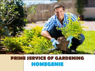 Gardening and landscaping maintenance, services in Dubai, UAE