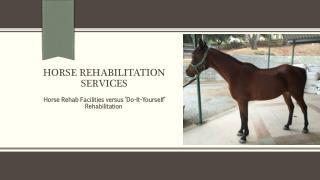 Horse Rehab Facilities versus 'Do-It-Yourself' Rehabilitation