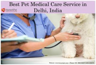 Best Pet Medical Care Service in Delhi, India