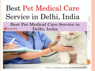 Best Pet Medical Care Service in Delhi, India