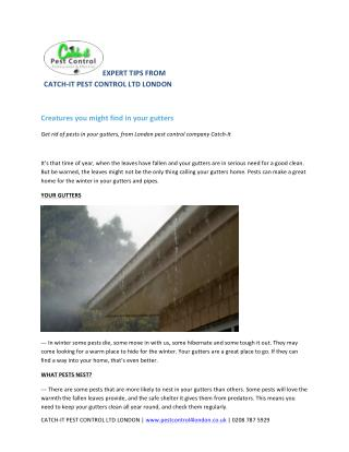 Creatures you might find in your gutters