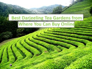 Best Darjeeling Tea Gardens from Where You Can Buy Online