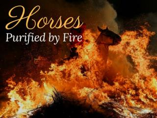 Horses purified by fire