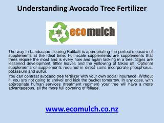 Understanding avocado tree fertilizer
