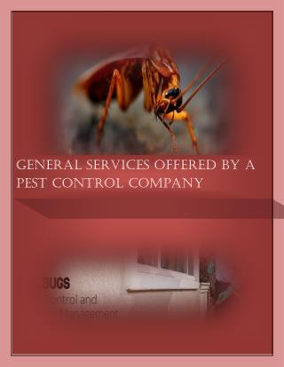 General Services Offered By a  Pest Control Company