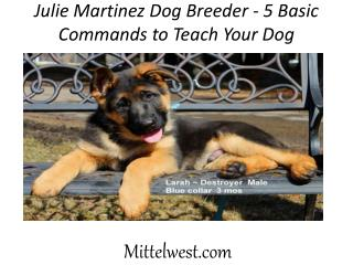 Julie Martinez Dog Breeder - 5 Basic Commands to Teach Your Dog