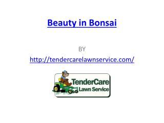 Beauty in Bonsai
