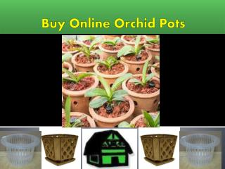 Buy Online Best Orchid Pots