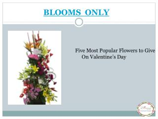 Five Most Popular Flowers to Give On Valentine's Day