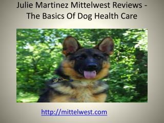 Julie Martinez Mittelwest Reviews - The Basics Of Dog Health Care
