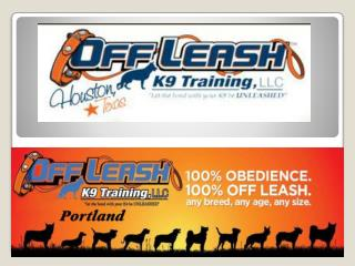 Dog Trainer Portland Oregon | Dog Training Portland OR | Dog Trainer Portland | Off Leash K13