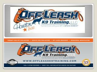 Dog Obedience Trainer Washington DC | Dog Training Arlington VA | Dog Trainer Bethesda MD | Off Leash K9